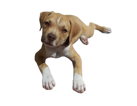 Image of a cute puppy